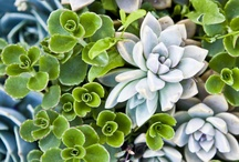 Succulents / by Tanya Brunnelson