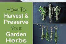 preservar ervas