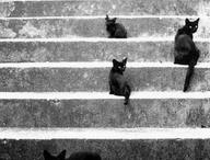 Cute Kitties / by Gabriella Scaringe