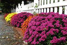 virág és növény nevelés