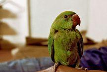 Public Domain Bird Pictures