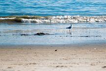 Coney Island Beach / Nana Gouvea on Coney Island Beach, oct 2014.