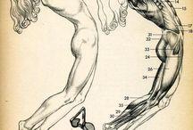 Anatomi Öğreticisi