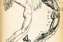 female anatomy refs