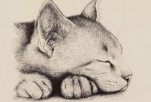 I gatti nel cuore