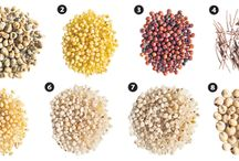 "Millets, plural / Random items about diverse grains we in English call ""millet."" Deficiencies in labeling mean there's often some uncertainty which millet is in a product. The grains are different."