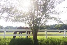 The Farm / Our Residential Campus in Awendaw, SC