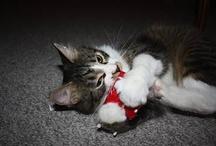 Kitties / by Alicia Thomas