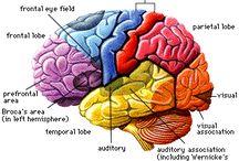 Thé brain