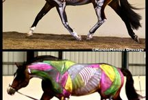 Anatomy In Motion - Equine