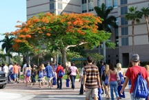 SharkTales Student Blog / by Nova Southeastern University
