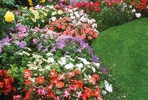 Gardening & flower bed ideas!