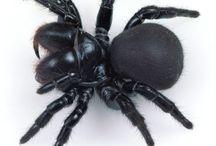 пауки и прочая нечисть