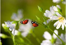Garden Crittters / by Linda Hardesty