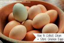 Chickens / Chicken Coops / Information for raising and caring for backyard chickens. / by Rachel @ Creative Homemaking