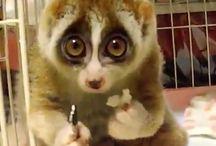 C U T E   A N I M A L S / Cute animals / Schattige dieren