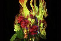Burning Garden