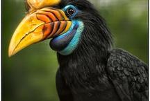 Birds hornbills 1
