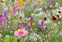 Blumensamen von SPERLI / Atemberaubende Blütenpracht für Augen, Nasen und Nützlingen. Mit unseren Blumen zauberst du dir in Handumdrehen eine farbige Pracht ins Beet, in den Kübel oder auf deinen Balkon.