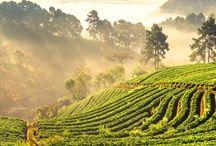 travel. // Thailand