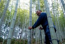 Bamboo grove/bamboo landscape/bamboo nature / 高知県須崎市安和にしか生育しない日本唯一、虎斑竹の竹林をはじめ、日本の竹林を紹介します。 Tiger bamboo grove is only place in the Japan(Kochi).
