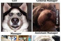 Funny! :) :) / humor