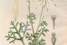 Botanical Elective