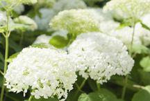 Blumen für den garten