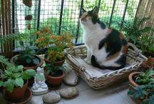 Cat Safe Balcony