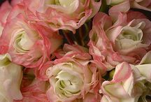 ENGLISH ROSES & MORE....