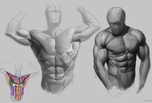 Anatomy Study Sample
