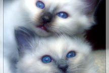 Feline Fur Babies