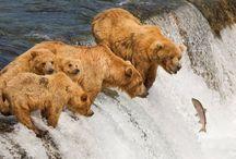 Bears / by Julie Van Fosson-Robinson