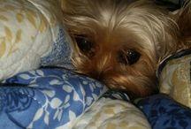 My Puppies / by Jessica Chambliss-Nix