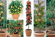 plantas frutiferas nos vasos