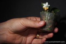 How to Mount Epiphytic Orchids onto Cork
