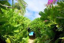Hawaii  / Traumziele und Infos für unsere Reise nach Hawaii im Mai 2015