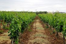 Wine tour in Apulia / When FRIENDSHIP and APULIAN WINE are the best link to the world!
