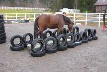 Horses obstacles corses