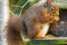 Our Woodland Gardens / Regular visitors to our woodland gardens; squirrels, birds, pine marten, badgers, deer (some more elusive than others) as well as blossom, flowers and our beautiful mature trees...