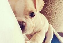 [photo] Cute Animals