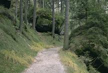 pathways / by Margaret Bruch