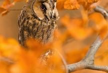 nature, places, animals...