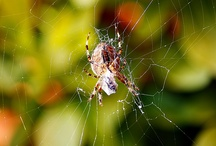 Spiders , Insects And Creepy Crawlies