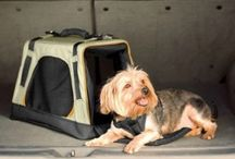 Pet Travel Gear / Is your pet prepared for his travels?  Whether it's a pet seat belt or pet barrier for the car or a travel carrier for his air travel...get shopping!  #pettravel / by TripsWithPets.com
