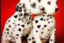 Dalmatians / by Dilly Rose