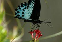 бабочки и прочая красота для рисунков
