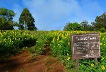 Trekking en Isla de Pascua / Rutas de trekking en la Isla de Pascua, una forma maravillosa de recorrer la isla y sentir cómo era la vida del pueblo Rapa Nui