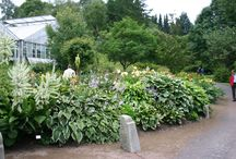 goteborg  botaniska  tradgard / goteborg  ogród botaniczny