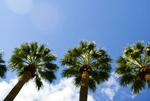 Pictures of Royal Palms / A photo tour of Royal Palms Resort and Spa in Phoenix/Scottsdale, AZ, and all of its treasures, hidden and exposed. / by Royal Palms Resort and Spa